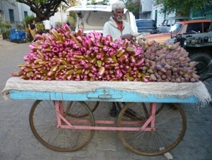 Flowers of India...