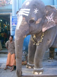 Mad for elephants ~ out the front of the Manakula Vinayagar Temple ~ Pondicherry