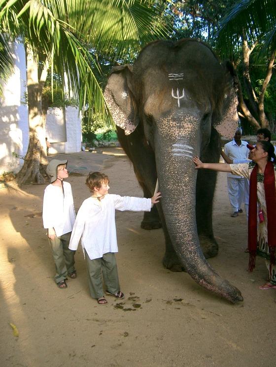 The ashram elephant...