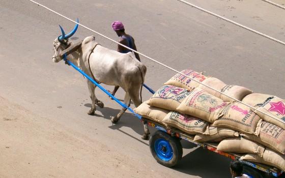 India 2006 2 035