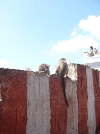 India 2011-2012 361