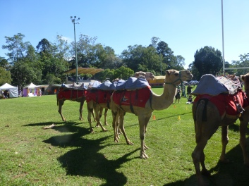 bellingen markets 6