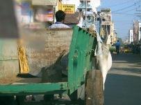 India 2006 3 232
