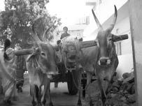 India 2006 7 128