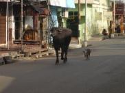 India 2011-2012 1040