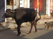 India 2011-2012 1041