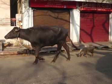 India 2011-2012 1042